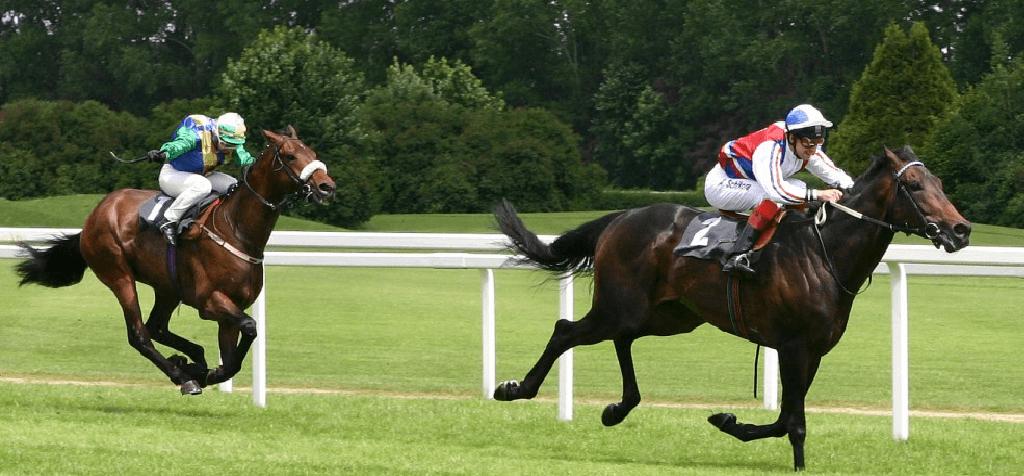 Equine HBOT