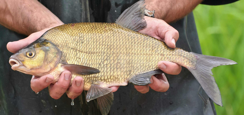 Oxygen for Fish Farming